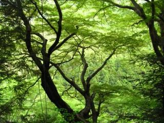 木からの木.jpg